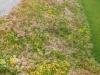 talus-chappuis-develier-3