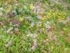 talus-chappuis-develier-4