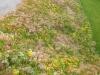 talus-chappuis-develier-5